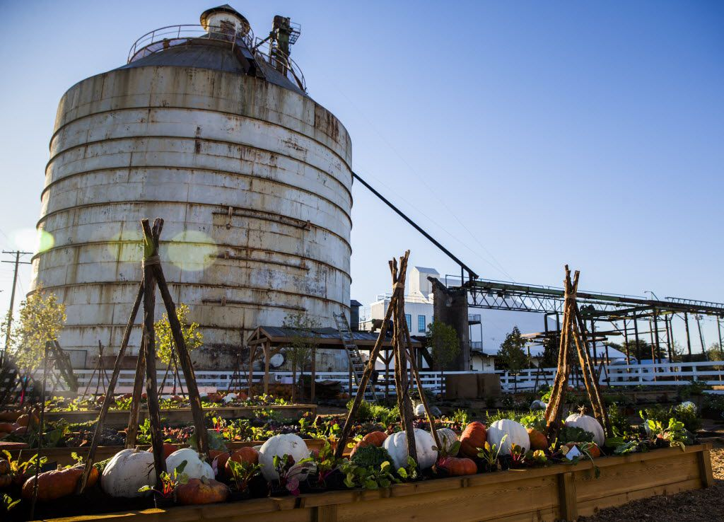 Pumpkins are displayed among lettuce and greens beneath silos outside the new location of Magnolia Market at the Silos, owned by Chip and Joanna Gaines, hosts of HGTV's Fixer Upper, on Thursday, October 29, 2015 at Magnolia Market at the Silos in Waco, Texas.   (Ashley Landis/The Dallas Morning News)