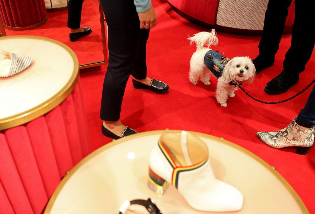 ZZ, a malti-poo dog, hangs out among the shoes at Neiman Marcus.