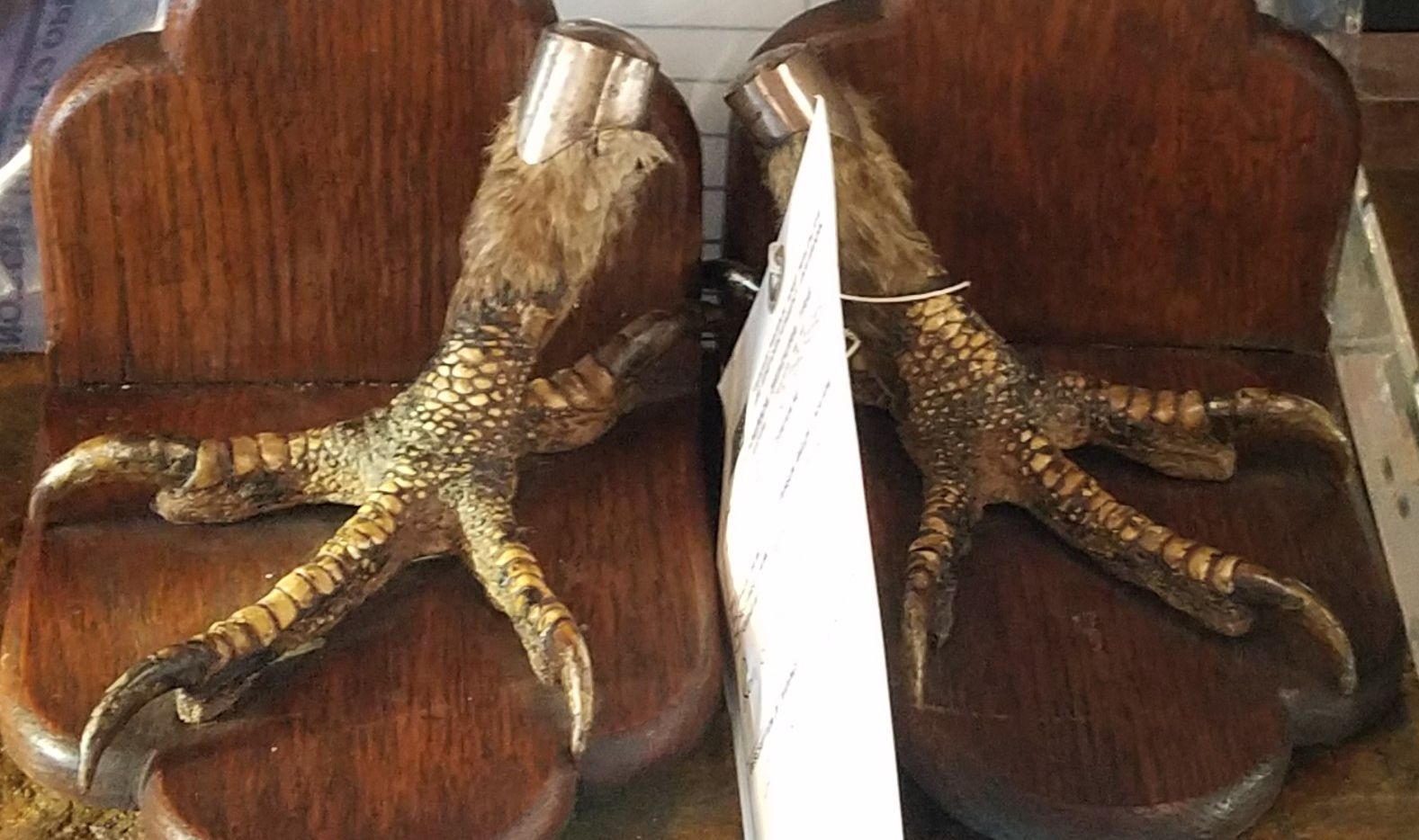 Raptor talons that were found up for sale on internet forums and online marketplaces. Texas Game Wardens cracked down on the sale of such items this week in Dallas-Fort Worth.