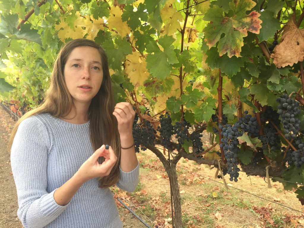 Third generation vintner Hailey Trefethen of Trefethen Winery leads the sustainability initiative at the family business.