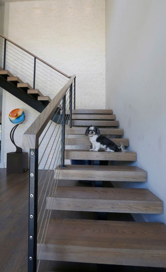 Gizmo, one of the Calaway's dogs, on the staircase in the entryway of the home. (Ron Baselice/The Dallas Morning News)