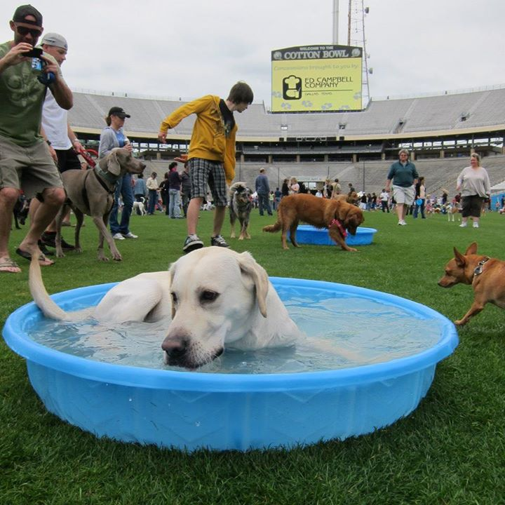 Four-leggers are invited to play on the Cotton Bowl's field during Dog Bowl on Sunday.