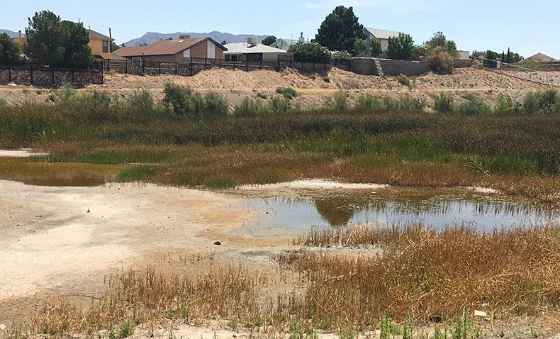 Standing water in a reservoir behind homes in El Paso is an area treated by vector control officers to prevent mosquitoes from breeding.