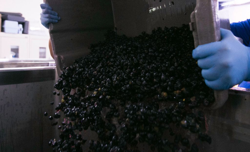 The destemmed grapes are dropped into a fermentation tank at the Eden Hill Vineyards in Celina.