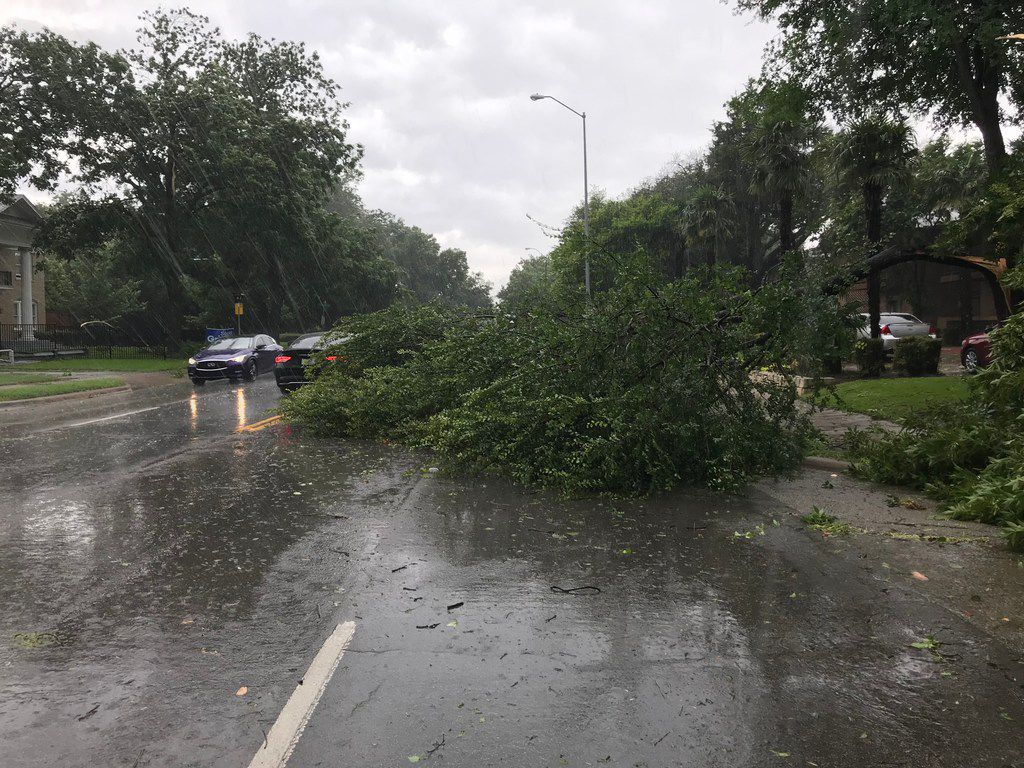Fallen trees block Gaston Ave  in historic East Dallas following a strong line of storms that moved through the city on Sunday, June 9, 2019. (Miles Moffeit/The Dallas Morning News)