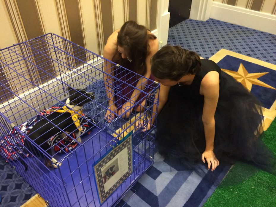 The Humane Society of Tulsa brought Texas puppies to the ball. (Jordan Rudner/staff)