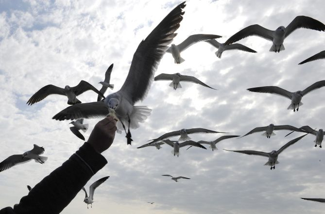 You can find deals where the gulls are: Galveston, South Padre Island and  Corpus Christi/Port Aransas.
