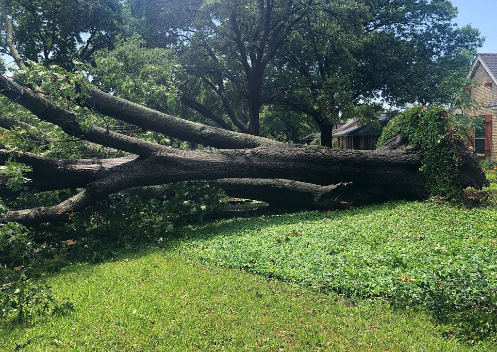 A large tree,  brought down by high winds, sits on Willow Ridge Road near Midway and Forest in the North Dallas area as a severe storm passed through Dallas on Sunday afternoon, June 9, 2019.