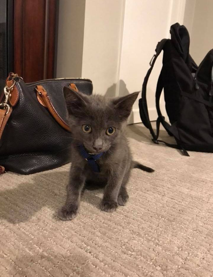 Dallas Chevy the kitten was rescued from inside the engine of Andrew and Christine Steelsmith's car in Dallas