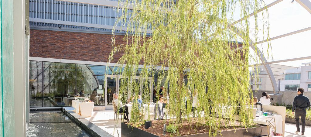Bible Garden and tree of life at the new Museum of the Bible in Washington, D.C.