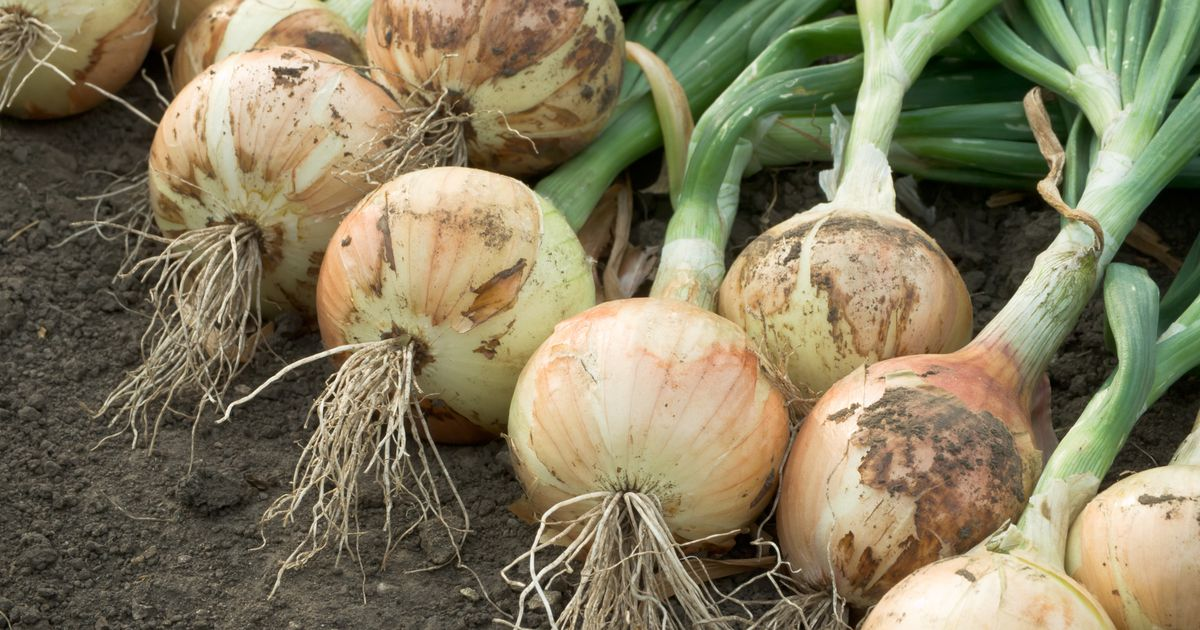 Love growing veggies? Here's what to plant before spring hits