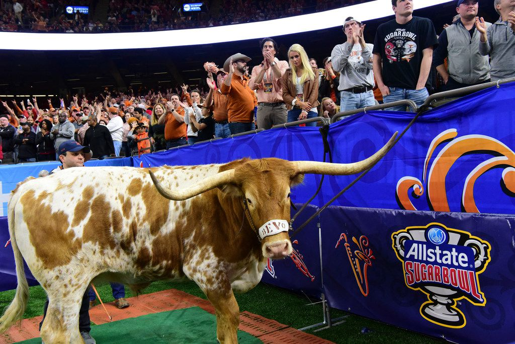 IMAGE DISTRIBUTED FOR ALLSTATE - Bevo the longhorn cheers on the University of Texas as they take on the University of Georgia at the 2019 Allstate Sugar Bowl at the Mercedes-Benz Superdome on Tuesday, Jan. 1, 2018, in New Orleans. (Cheryl Gerber/AP Images for Allstate)