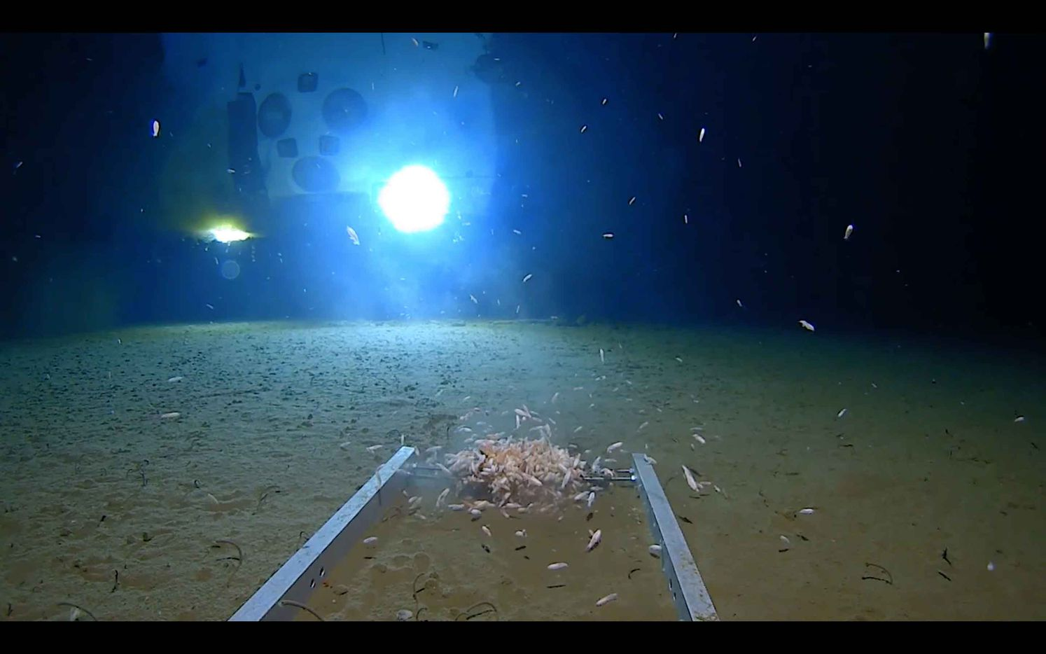 Images from the bottom of the Challenger Deep.