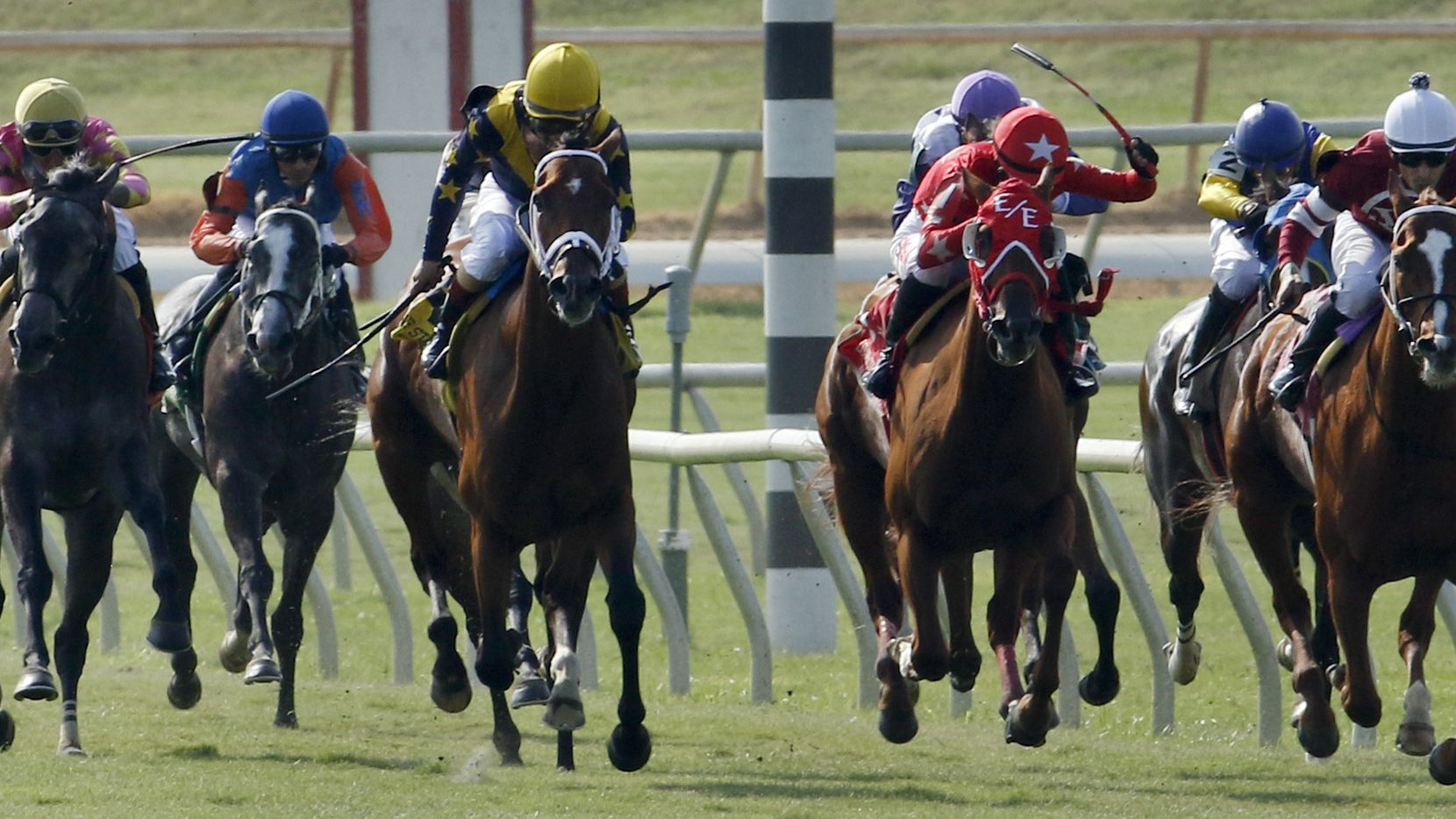 Horses head into the home stretch at the Lone Star Park Turf Stakes in Grand Prairie on May 27.