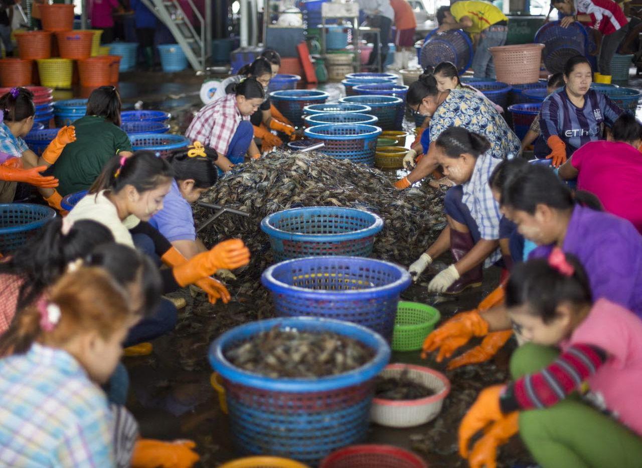Un grupo de trabajadores del camarón limpian el marisco en un mercado en Mahachai, Tailandia. Una investigación reveló las condiciones infrahumanas de los camaroneros en ese país asiático. (AP/GEMUNU AMARASINGHE)