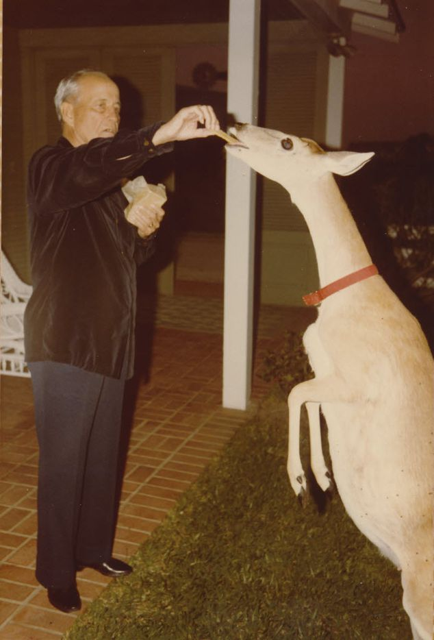 A tame deer named Bonnie reaches for a treat from Dallas oilman Toddie Lee Wynne Sr. at his home on Matagorda Island.