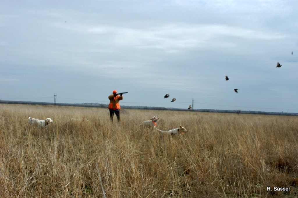 The best advice for quail hunters is to hustle to the dogs when they go on point. Otherwise, quail will run away from pointing dogs, frustrating both dogs and hunters.