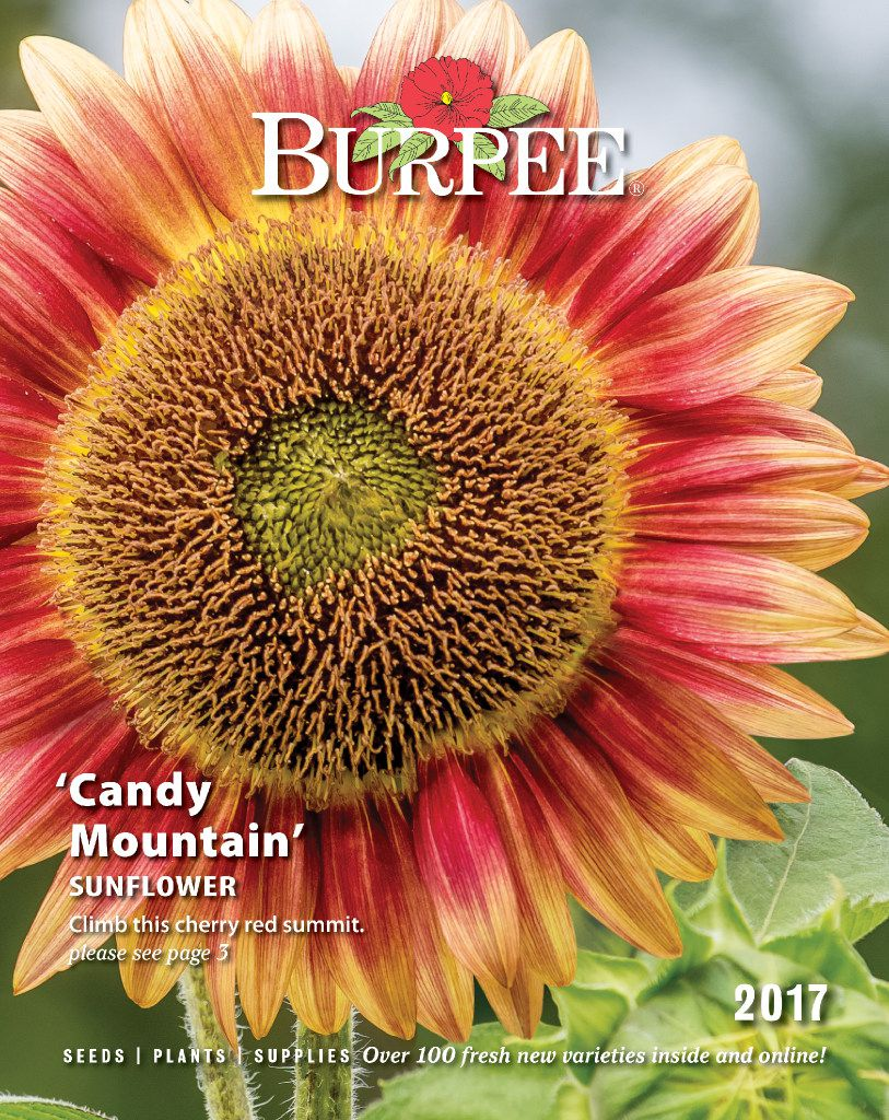 Burpee 2017 seed catalog