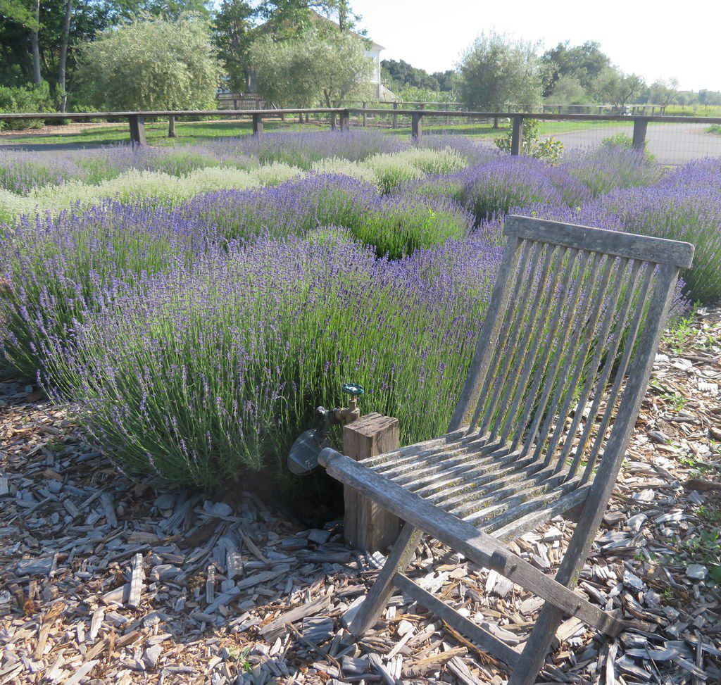 Erda Tea's herbal garden is a peaceful, contemplative space.