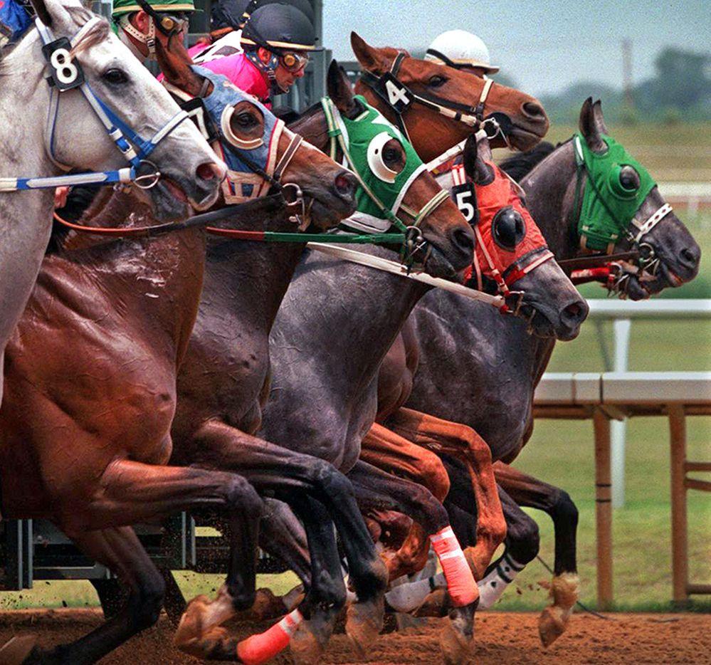 Entrada a las carreras en  Memorial Day costará $1 en el Lone Star Park de Grand Prairie. Foto archivo DMN