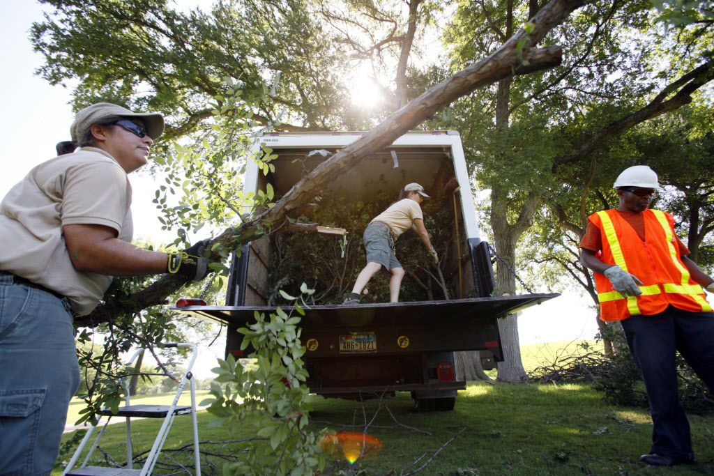 Elephant keeper Krystle Hughes lifts a large branch from a cedar elm tree at Tenison Park Golf Course to hand to colleague Emily Kornmuller (center) for transporting to the Dallas Zoo. The man on the far right is  Dallas forestry worker Melvin Smith.