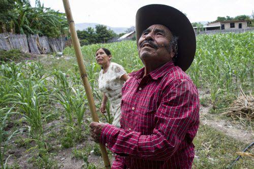 Los recién casados Pablo Ibarra y Francisca Santiago cortan tunas en Santa Ana, Oaxaca. La pareja se conoció en 1967.