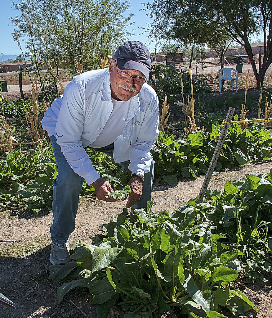 Roger Pfeuffer offers just-picked acelgas as part of a  Taste of History   tour of historic Mission Garden in Tucson.