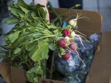 The contents of a farm box from Comeback Creek Farm  from farmer John Kilburn on Wednesday, April 15, 2020, at the Dallas Farmers Market in Dallas. (Ashley Landis/The Dallas Morning News)