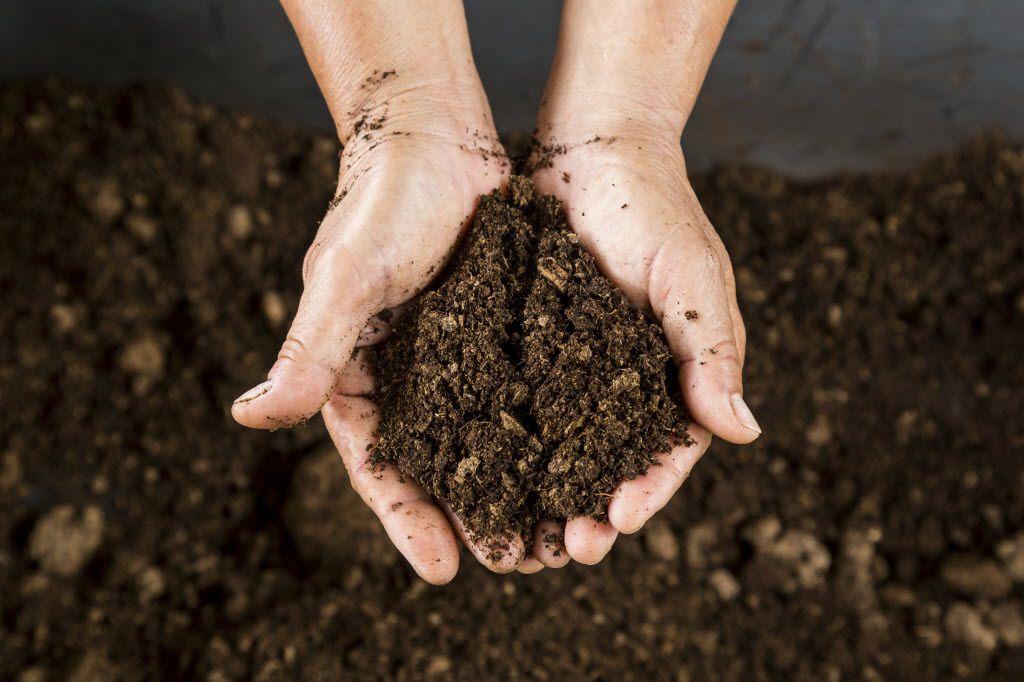 Soil peat moss