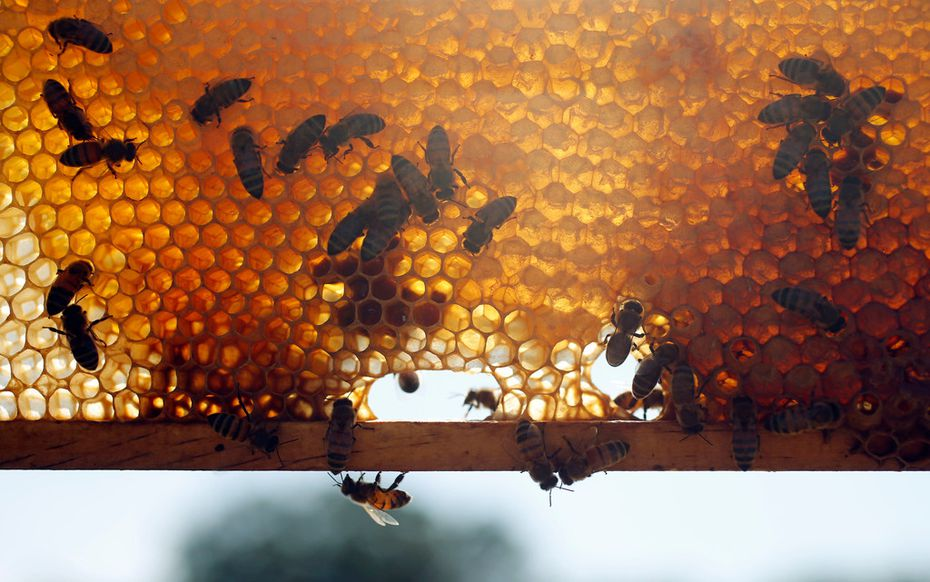 Some mead makers keep their own bees and distribute wholesale honey to other producers.