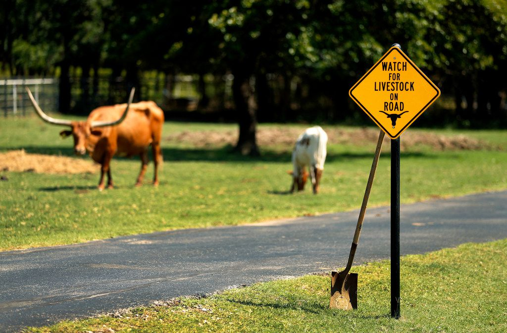 A caution sign on a driveway just outside Argyle warns drivers on a private driveway to be aware of longhorn steers.