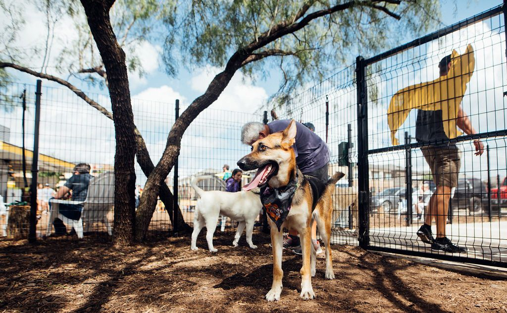 """Mutts Canine Cantina invites dog lovers to apply to be their """"puptern."""""""