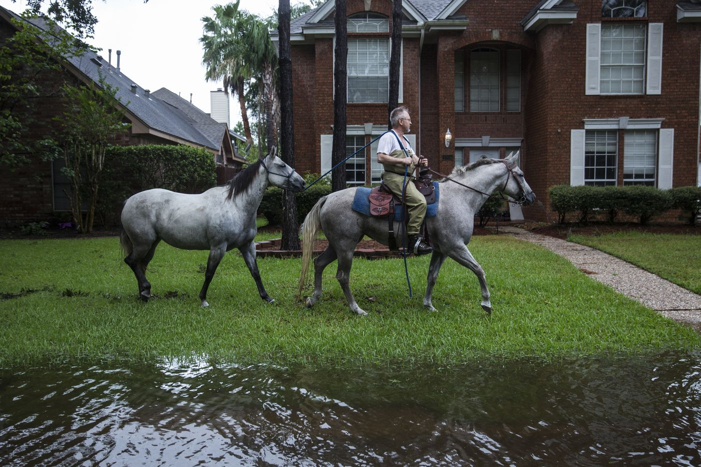 A man leads a horse through a neighborhood after the area became flooded in Houston, Aug. 29, 2017.