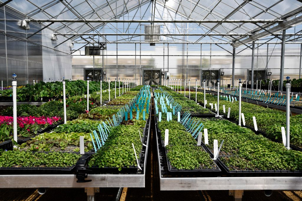 A sprinkler system line flower beds to spread a fine mist on plants at Dallas Arboretum's newest greenhouse, The Tom and Phyllis McCasland Horticulture Center in Mesquite, Friday April 05, 2019. The pads, fans and sprinklers are controlled with the Wadsworth Control System. Ben Torres/Special Contributor