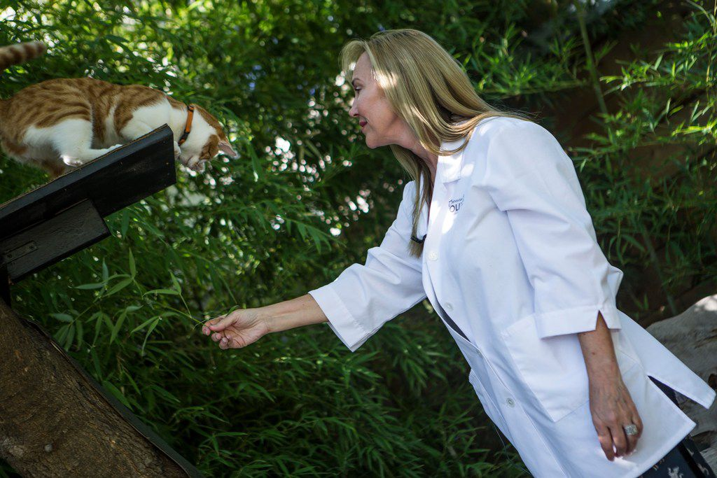 Molly DeVoss, a certified feline training specialist, plays with a foster cat Marmalade at MDVC Creative in Dallas.