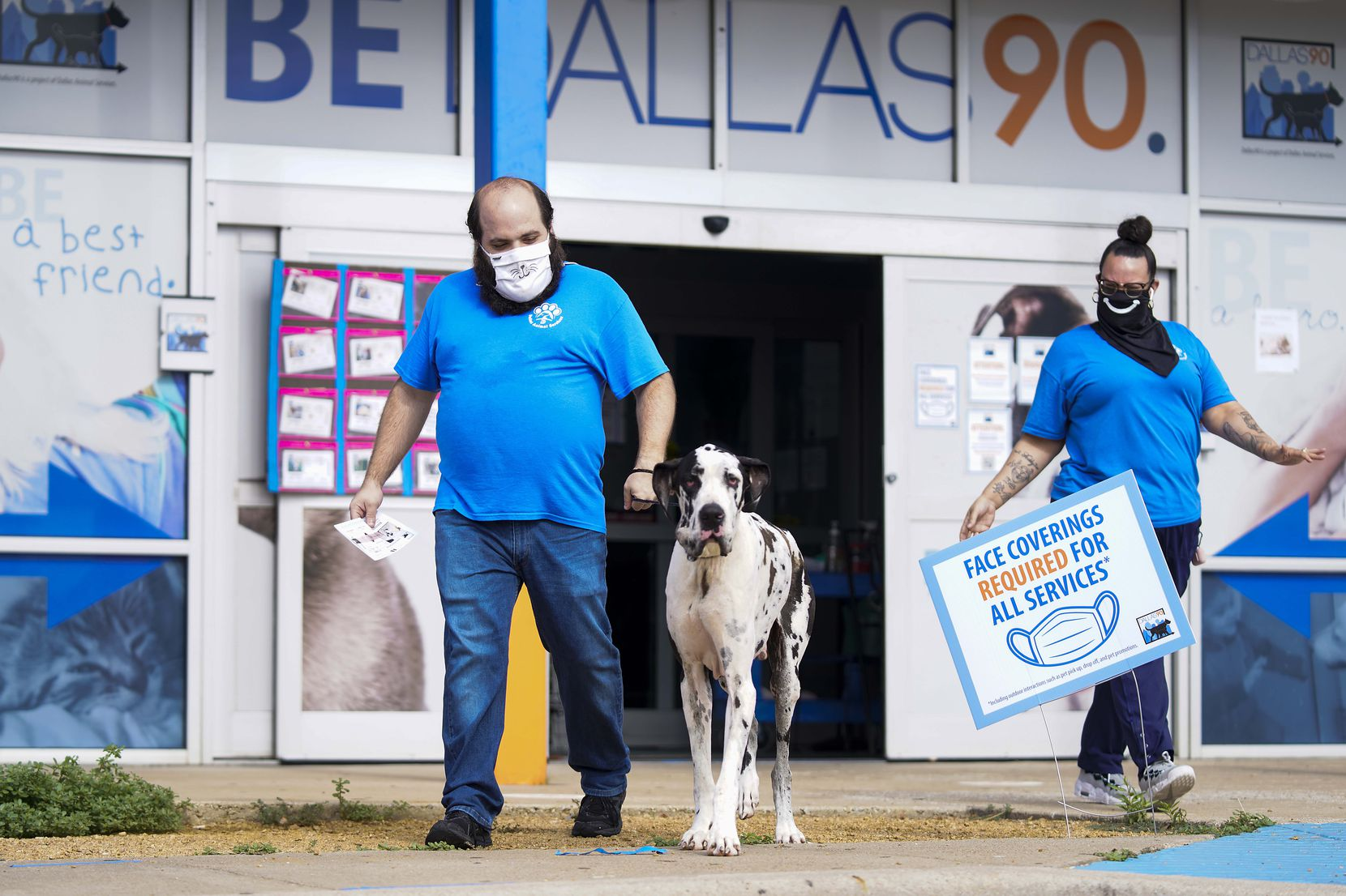 Animal keeper John Silvestri and animal care technician Brigitte Beddow led a Great Dane to the parking lot for curbside pickup at Dallas Animal Services last summer. Once the pandemic began, DAS converted to an online adoption process. Recently it's begun hosting a few adoption events outdoors.