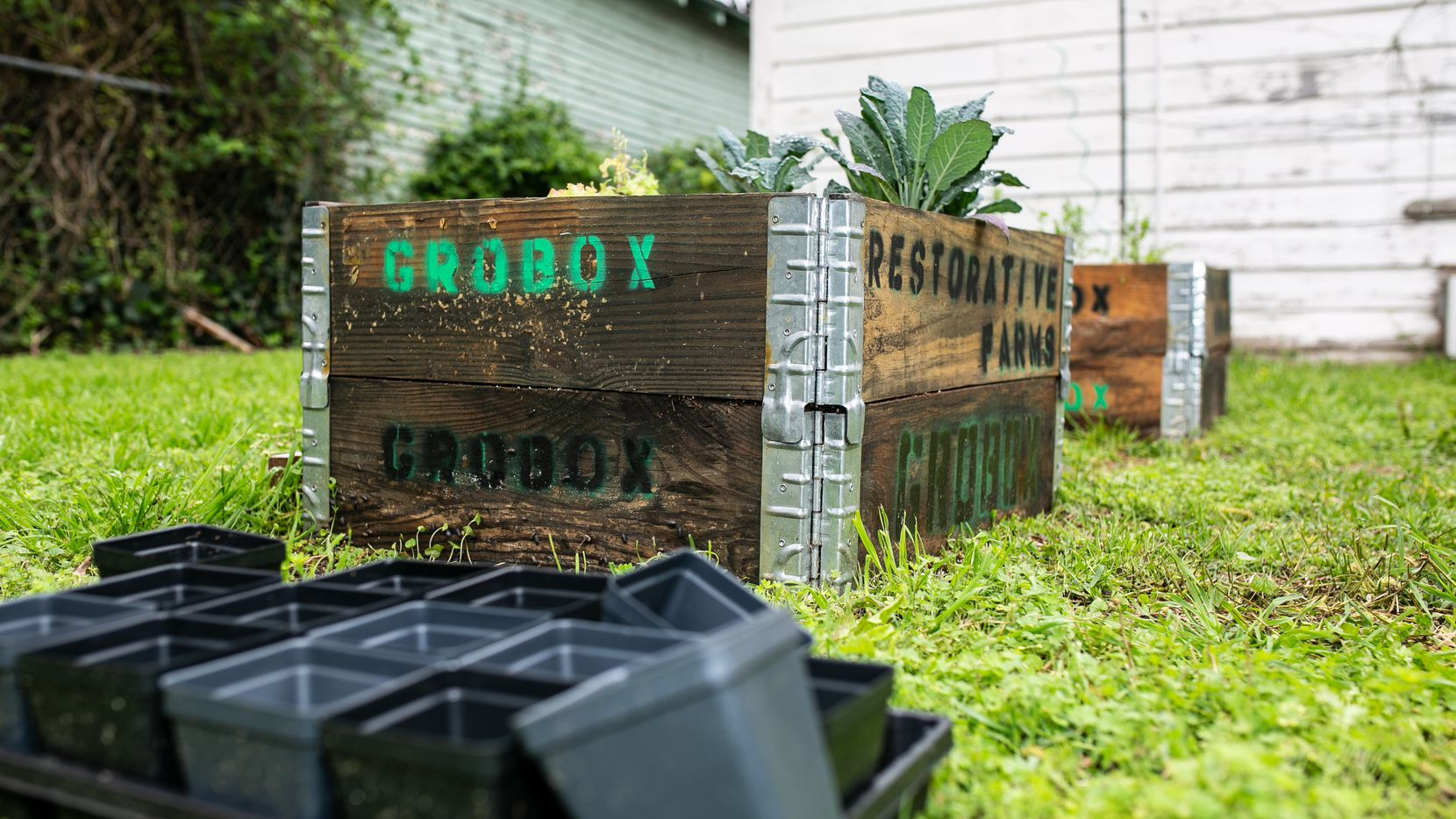 GroBox gardens from Restorative Farms comes with Dallas-grown seedlings.