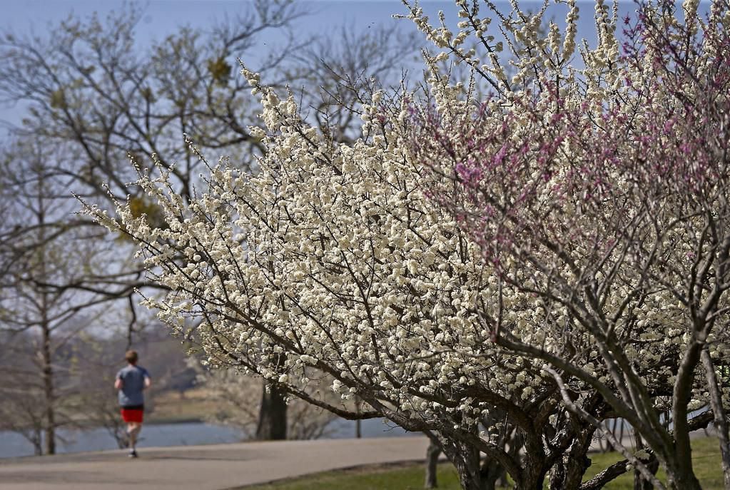 Algunos árboles sueltan polen hasta mayo. Los próximos días los detonantes de alergias estarán en altísimo nivel. (DMN/JAE S. LEE)