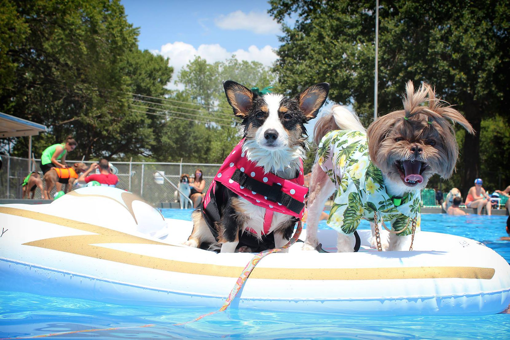 Luna (left) and Ducky lounged at last year's Pooch Paddle in Corsicana.
