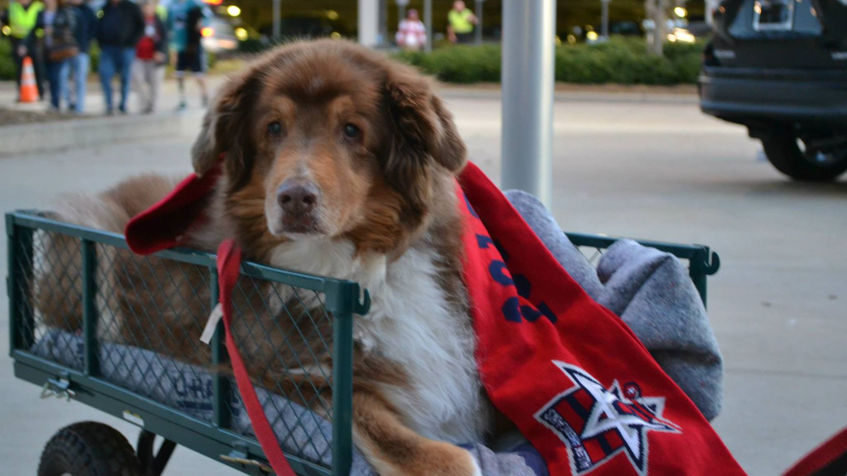 Pucks 'n Paws Night on Sunday will feature a dog-friendly section and intermission entertainment including doggy Zamboni riders and a canine costume contest.