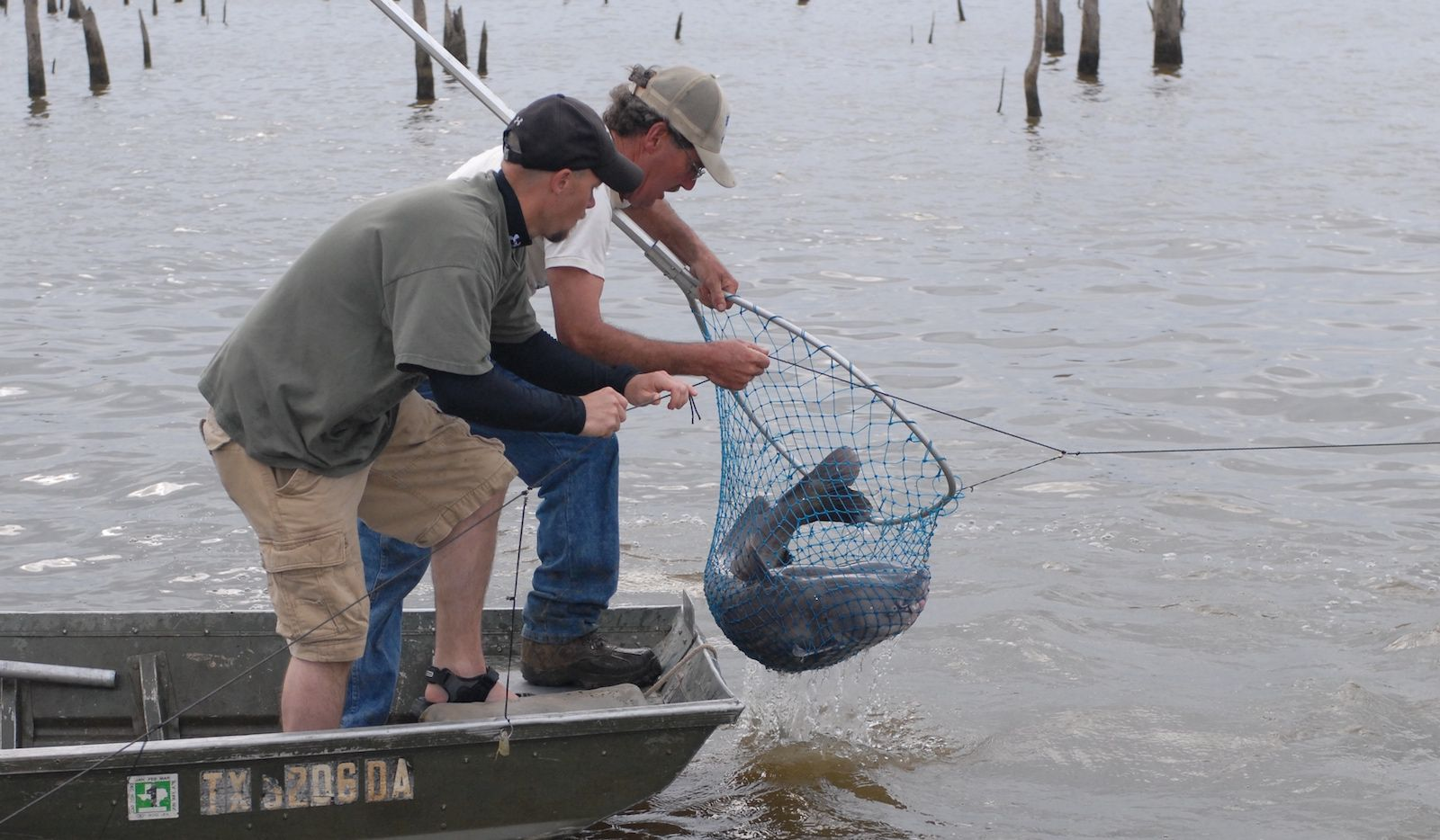 A 25-fish daily limit, with no minimum length, that would allow anglers to take no more than five fish 30 inches or longer is one of three special limits under consideration. TPWD says the limit would be applicable for large reservoirs such as Sam Rayburn and Livingston, where recruitment is high, growth is good and anglers primarily want to harvest catfish. Lake Tawakoni and interjurisdictional lakes including Toledo Bend, Texoma and Caddo would not be impacted by the new regs.