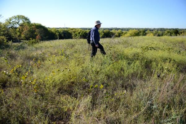 John Lingenfelder, with the Native Plant Society of Texas' Collin County Chapter, walks across the 7-acre blackland prairie in Plano's Oak Point Park and Nature Preserve on Oct. 21. Lingenfelder is among a group of environmentalists advocating to protect the prairie. The group is worried a two-day music festival in the spring could in future years damage the prairie.
