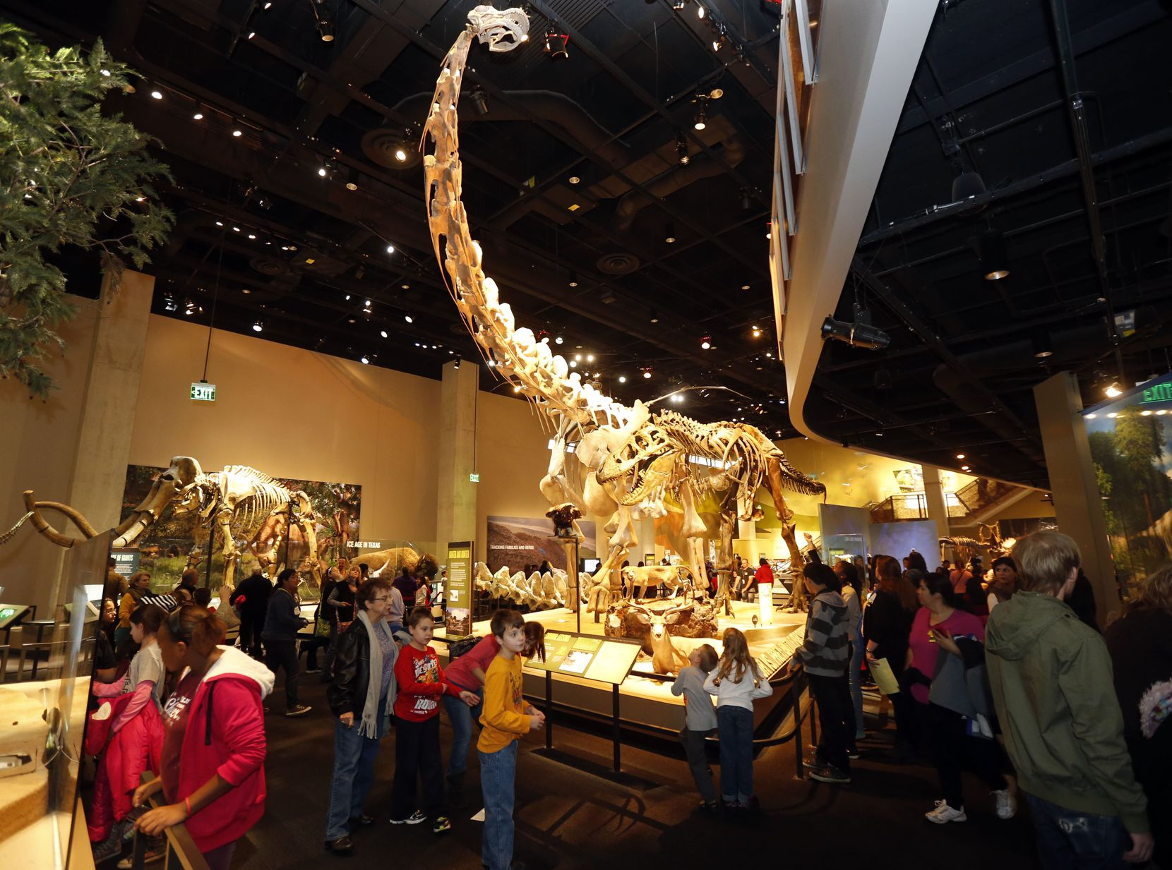 Crowds look up at an Alamosaurus in the dinosaur exhibit at the Perot Museum of Nature and Science.