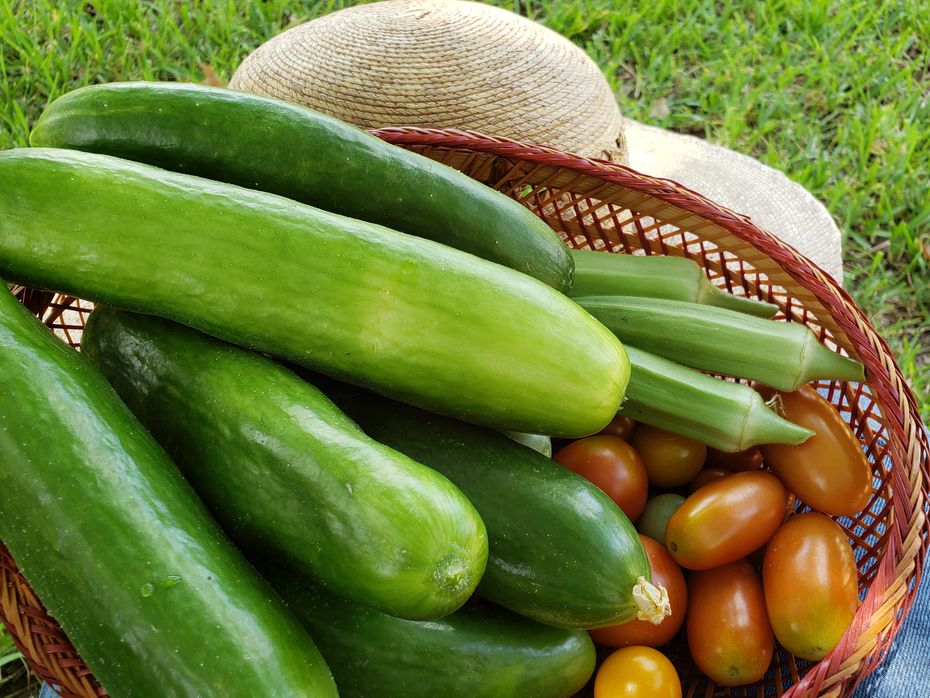 The bountiful garden of Betsy Marsh yielded plenty of cucumbers that son Mason pickled for the family's enjoyment.