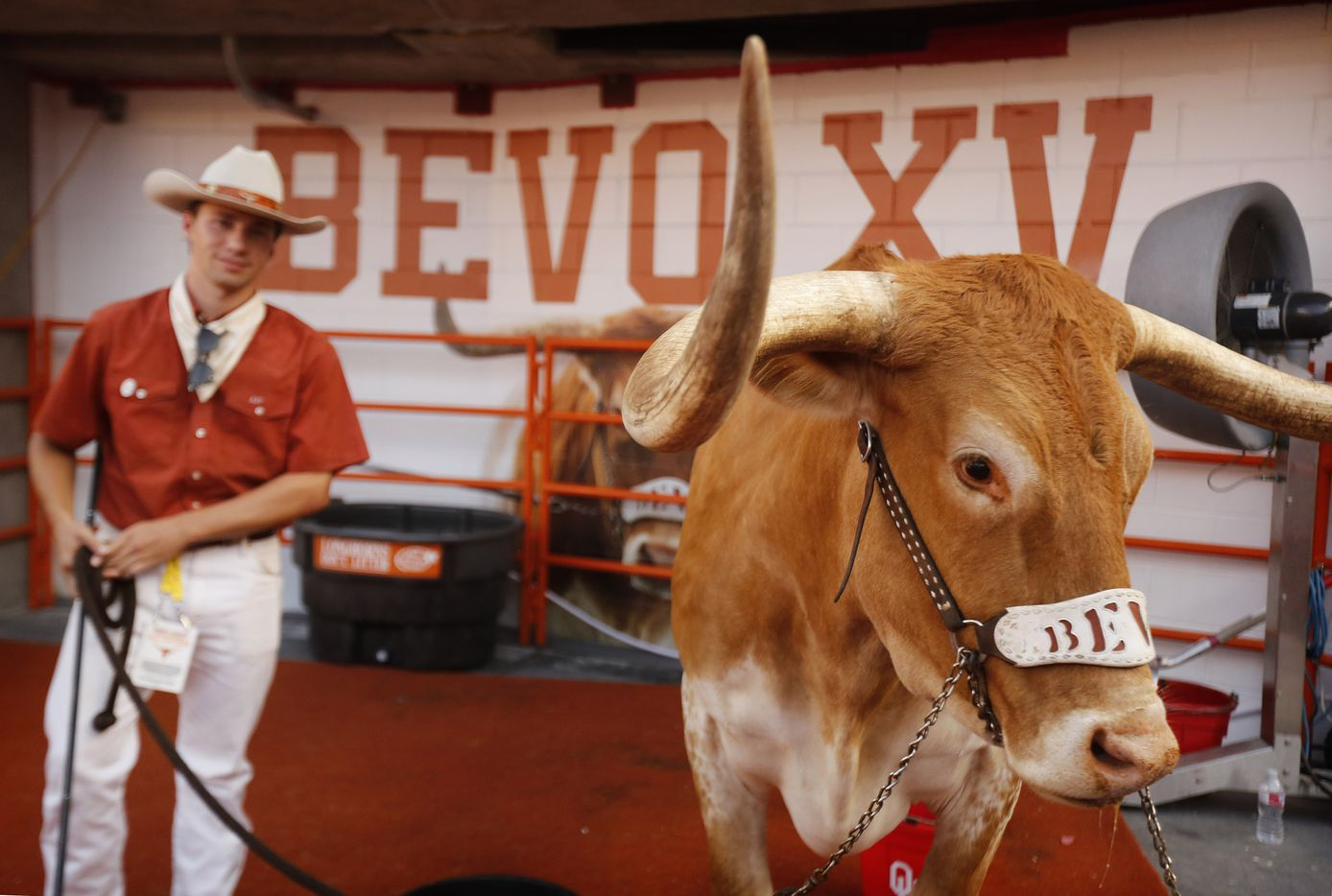 Bevo XV, the Texas Longhorns mascot, was at field level in his pen for the season-opener against the Louisiana-Lafayette Ragin Cajuns at DKR-Texas Memorial Stadium in Austin, Saturday, September 4, 2021. (Tom Fox/The Dallas Morning News)