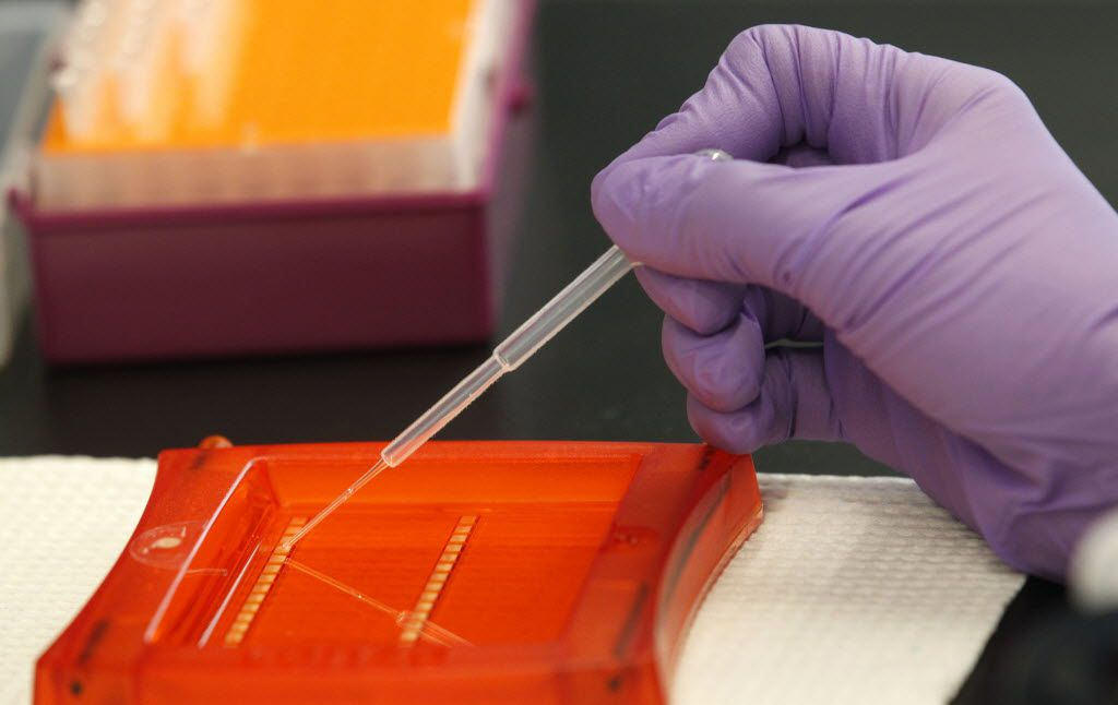 A DNA sample undergoes analysis.