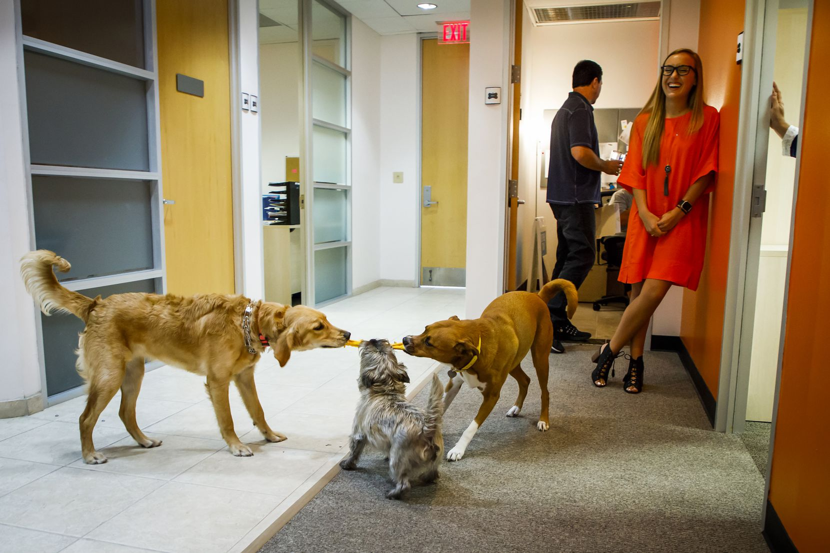 """Media coordinator Sharon Lowe laughed as her dog Lola (right) played with her coworkers' dogs in the hallway outside offices at The Loomis Agency in 2017. Not only is the office dog-friendly, it's central to the agency's motto, """"The Voice of the Underdog."""""""