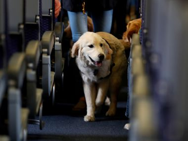 Airlines are required to accommodate service dogs on flights.
