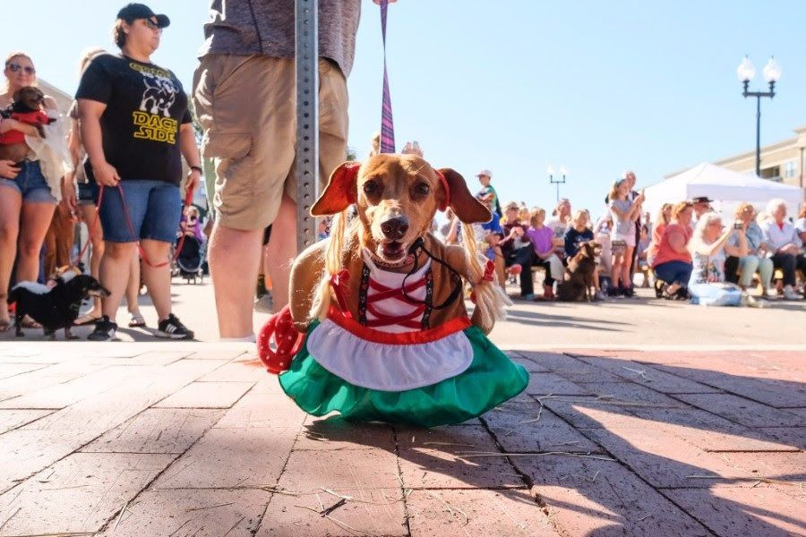 Plano's annual Steinfest includes a dog fashion show