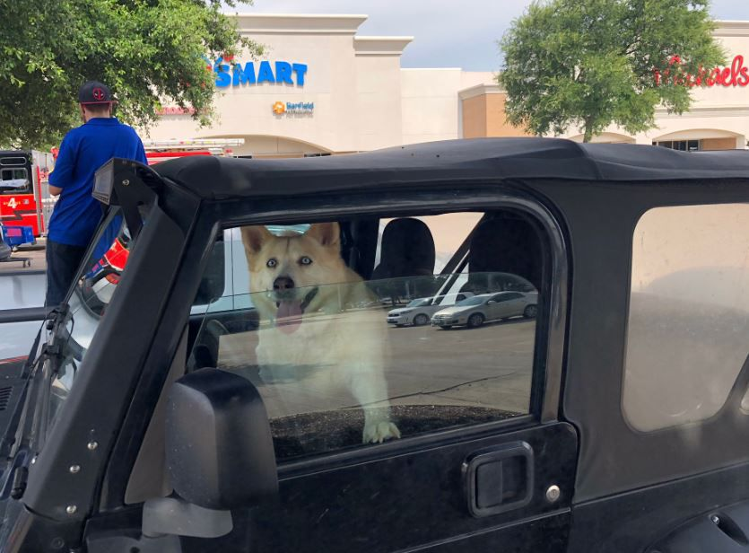 A dog sits in a car outside a PetSmart near where a gas line was accidentally cut Tuesday morning in McKinney.